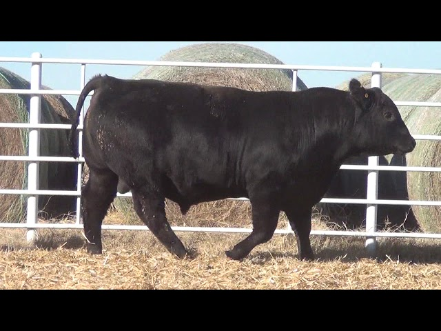 Express Ranches Lot 360