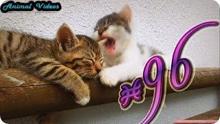 Приколы с животными №96   Не буди спящего  Смешные животные  Animal videos