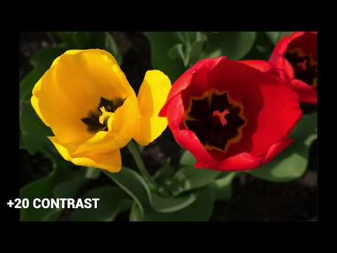 the-power-behind-contrast-and-saturation-in-your-photography