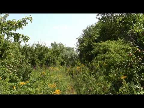 Neponset River Mouth : Quincy MA Squantum Point State Park Part 2.
