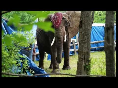 Nosey's Life Behind The Circus Tent