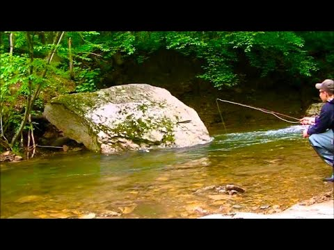 Native Brook Trout Fly Fishing PA 2014