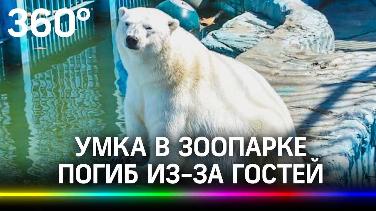 Умка съел мяч и погиб. Арктическое детство и смерть белого медведя из екатеринбургского зоопарка - скачать с YouTube бесплатно