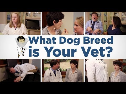 What Dog Breed Is Your Vet? -- with Dr. Andy Roark