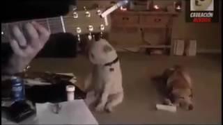 Собака танцует под песню группы Нирвана