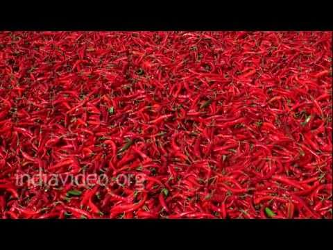 Drying Red Chilli, Nandikonda