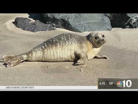 Don't Pet the Seals! Marine Experts Warn to Keep Your Distance From These Cute Creatures