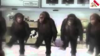 Смешное видео - шимпанзе танцуют лезгинку