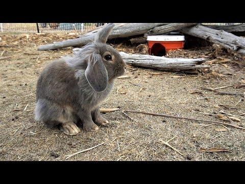 GoPro Camera Down A Rabbit Hole