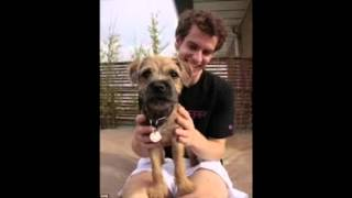 Why You Should Get A Border Terrier