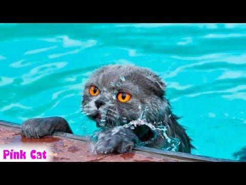 Hài hước tột độ với những pha xử lý của Mèo khi rơi xuống nước 😂😂😂