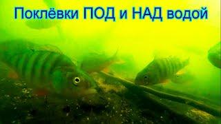 Рыбалка на озере Карасун Краснодар Поплавочная удочка Fishing Съёмка под и над водой Поплавок