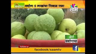 वर्षाला ५ लाखांचा नफा..   पाहा पेरू शेतीची यशोगाथा | Guava farming success story