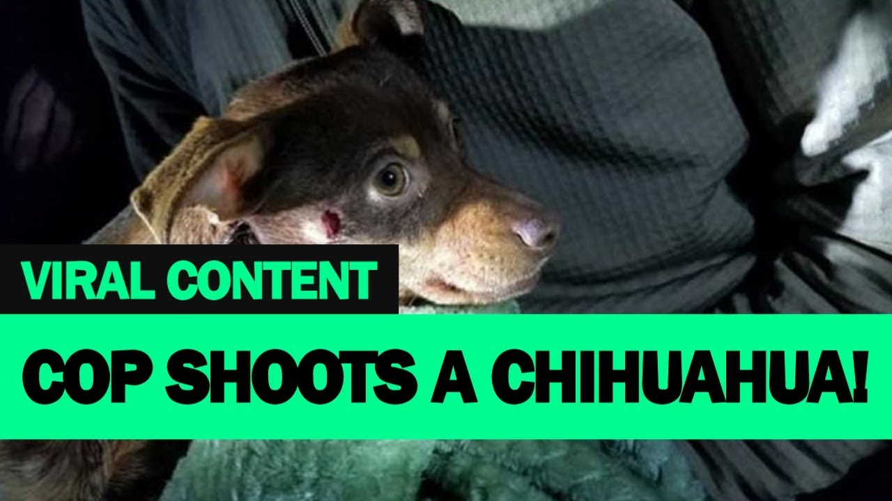 Shocking Footage Cop Shooting Chihuahua Full Video Viral Content