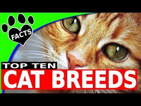 Top 10 Most Popular Cat Breeds Cats 101 - Animal Facts