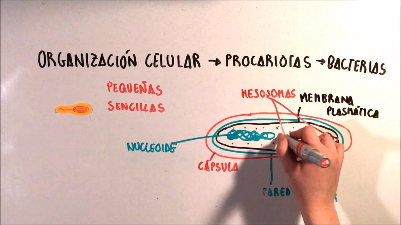 Morfología Celular