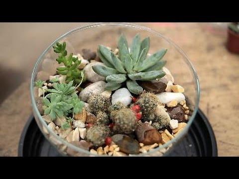 Mini jardins os bibel s bot nicos youtube for Jardin miniature