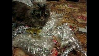 Новогодние кошачьи проделки. Часть 2 - Пляски кота вокруг ёлки
