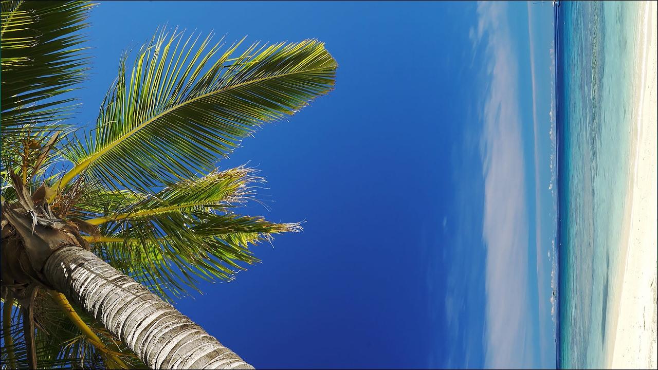 Vertical 4k blue lagoon palm tree 1 hour real time scene screensaver live wallpaper youtube - Free palm tree screensavers ...