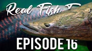 Wild Caught Aquarium Fish. Good or bad? Real Fish Talk 16 thumbnail