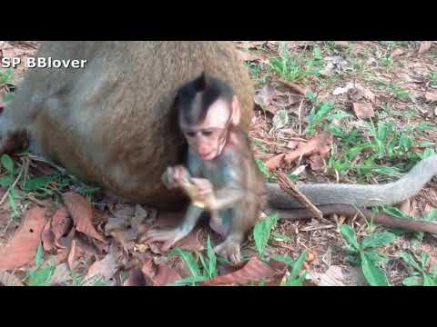 Nature Life Vivi Ep 25 Monkey Mom Try To Wean Baby Monkey