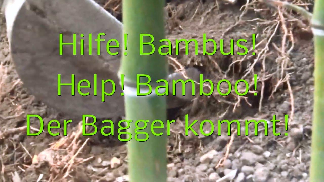Bambus Rhizome Entfernen : hilfe bambus der bagger kommt youtube ~ Watch28wear.com Haus und Dekorationen