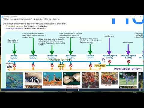 Evolution Prezi #6: Speciation