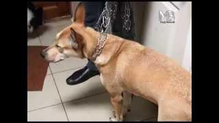 Вакцинация домашних животных.
