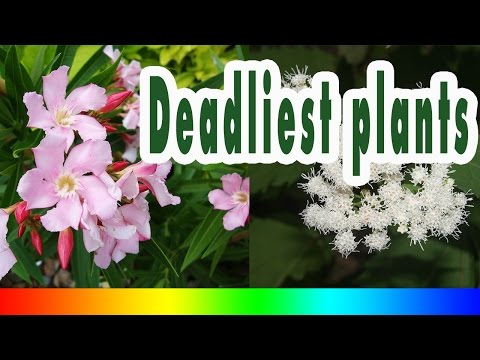 poisonous plants - 10 Deadliest plants on earth
