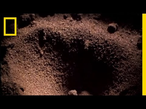 Antlion Death Trap | National Geographic