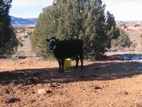 The Bureau of Land Management's Cattle-Ravaged Lands in Southern Utah