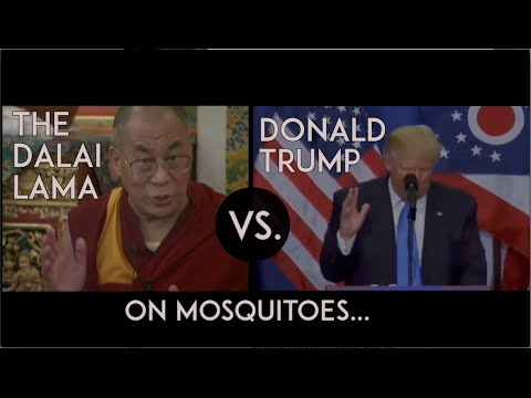 Trump‬ versus the ‪‎Dalai Lama‬: Mosquitoes - Who is more compassionate towards a mosquito?