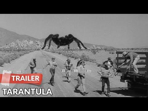 Tarantula 1955   John Agar