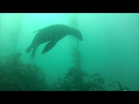 I went back through the video from my two dives on March 4th, 2012 with the intent of making a video short enough to watch.   I hope this is an improvement over https://www.youtube.com/watch?v=UEeZfh2pcbw  Original Description: Diving near Mill Creek with Grant. Saw some lings, rockfish, greenlings, wolf eel, and the standard mix. Great structure and nice clear 30+ ft vis.