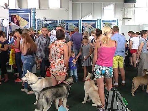 Местечко Свобода Курской области на день стало общероссийской столицей собаководов