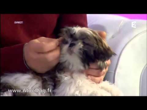 produit pour laver les yeux et les oreilles de votre chien france 2 05 02 2014 youtube. Black Bedroom Furniture Sets. Home Design Ideas