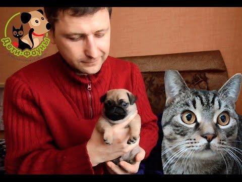 Как колоть кальций собаке после родов