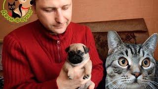 Эклампсия у собак. Судороги у собаки после родов