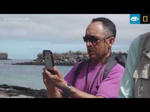 Hybrid Iguana | Galápagos | Lindblad Expeditions-National Geographic