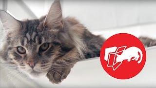 Знак 5: Кошка прячется