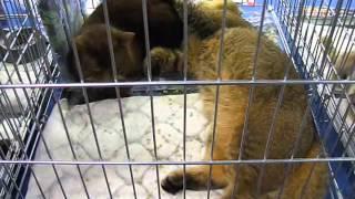 Свадьба котов Кот и кошка вязка Wedding Cat Cat and cat breeding