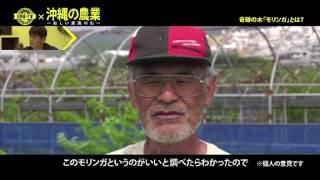 【098TV】#51 沖縄の農業 ~新しい農業の形~