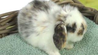 Кролики — диарея у кролика