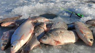 КАРАСИ ПОДНИМАЮТ КИВКИ Зимняя Рыбалка по Последнему Льду