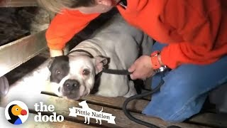 People Find PIT BULL Chained in the Basement of New Home | The Dodo Pittie Nation