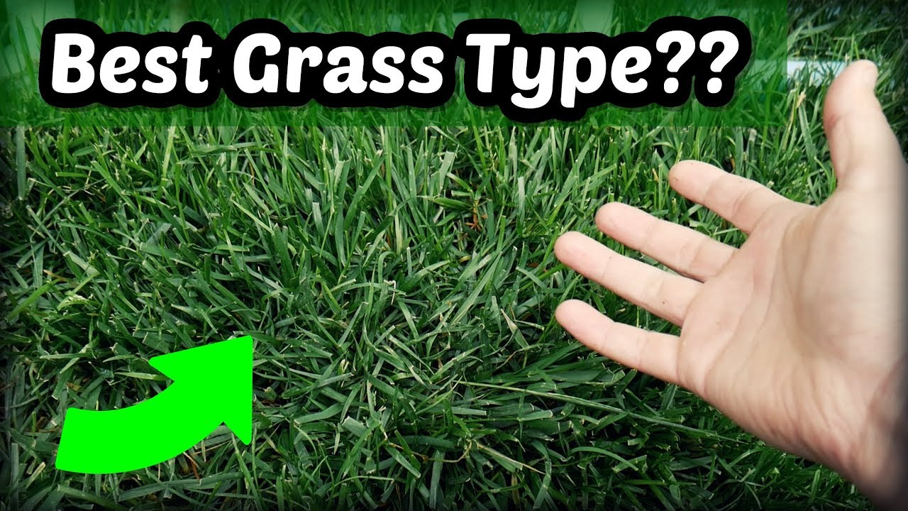 Is Tall Fescue The Best Cool Season Grass Type Youtube