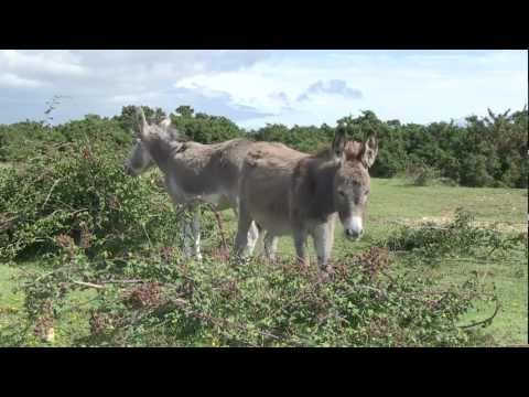 Discover The New Forest National Park