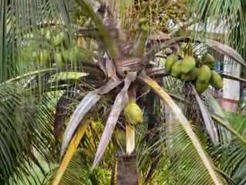 Mel's Jolly en Cuba