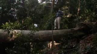 Video Peranmai Forest Visit Video download MP3, 3GP, MP4, WEBM, AVI, FLV November 2017