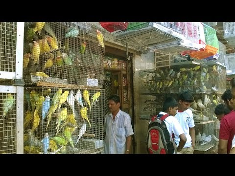 Starting A Business - How To Start Your Own Business Bird Shop And Bird Store